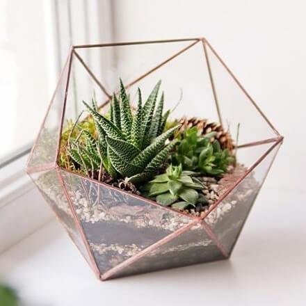 Succulent & Cactus Plants