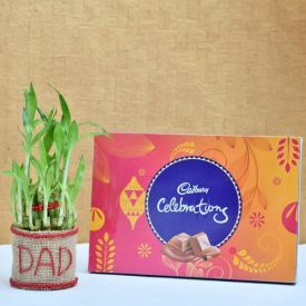 Lucky Bamboo with Chocolate for DAD