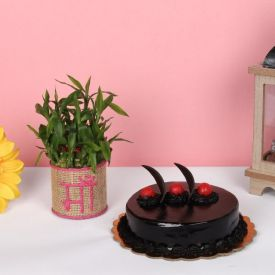 Lucky Bamboo and Chocolate Truffle Cake