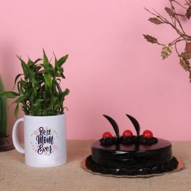 Cake and Lucky Bamboo in Mug
