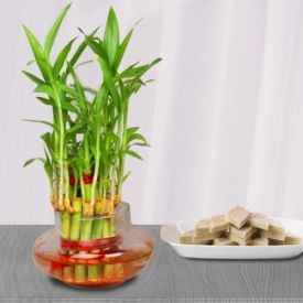 Bamboo Plant N Pista Burfi