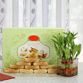 Milk Cake with Plant