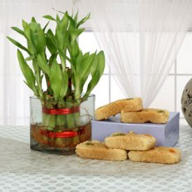 Plant with Milk Cake