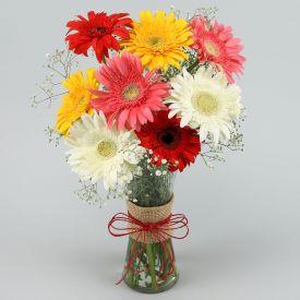 12 Mixed Gerbera with Vase