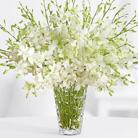 White orchid and in vase