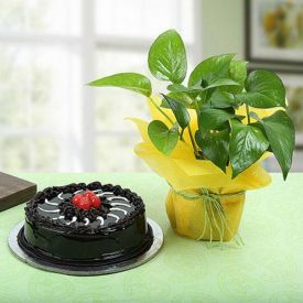 Cake With Green Gift