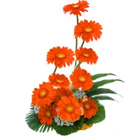Basket arangement of 12 Gerberas,