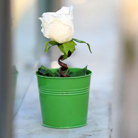 Serene Artificial Rose Plant