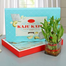 Lucky Wishes Bamboo Plant  With Kaju Barfi