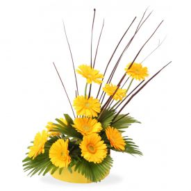Basket of yellow gerbera